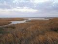 colorado-river-delta-1