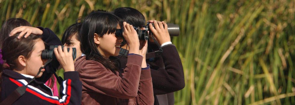 kids-birding